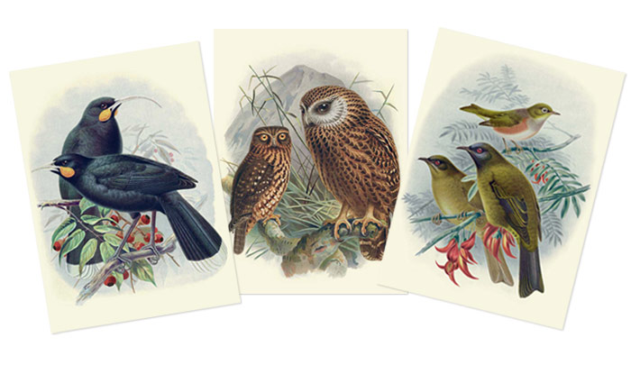 Buller's Birds of New Zealand Stationery | Te Papa