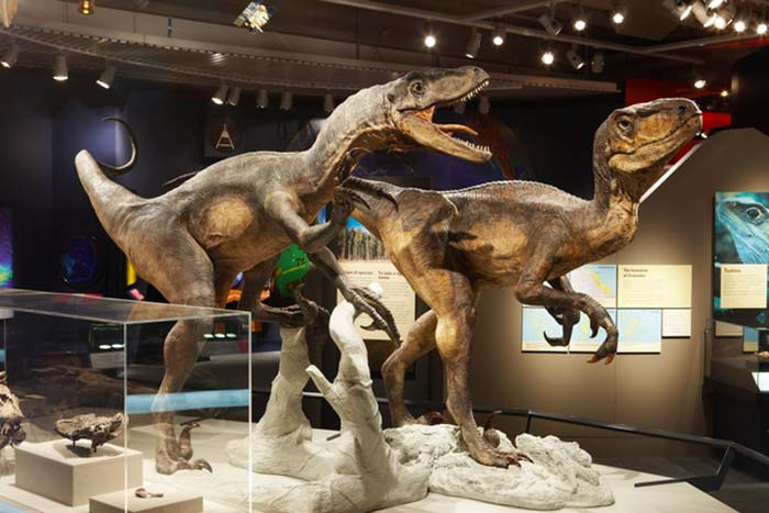 Dinosaurs in Awesome Forces. Photograph by Michael Hall. Te Papa