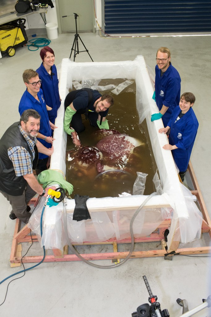 Squid tank from above with scientists standing around it, with one inside holding the squid