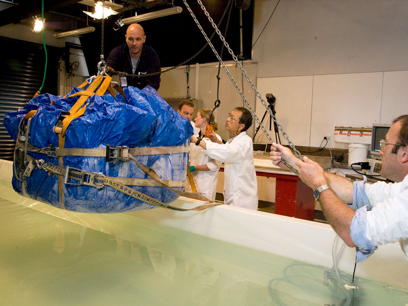 The squid in an iceblock is lowered into its thawing tank