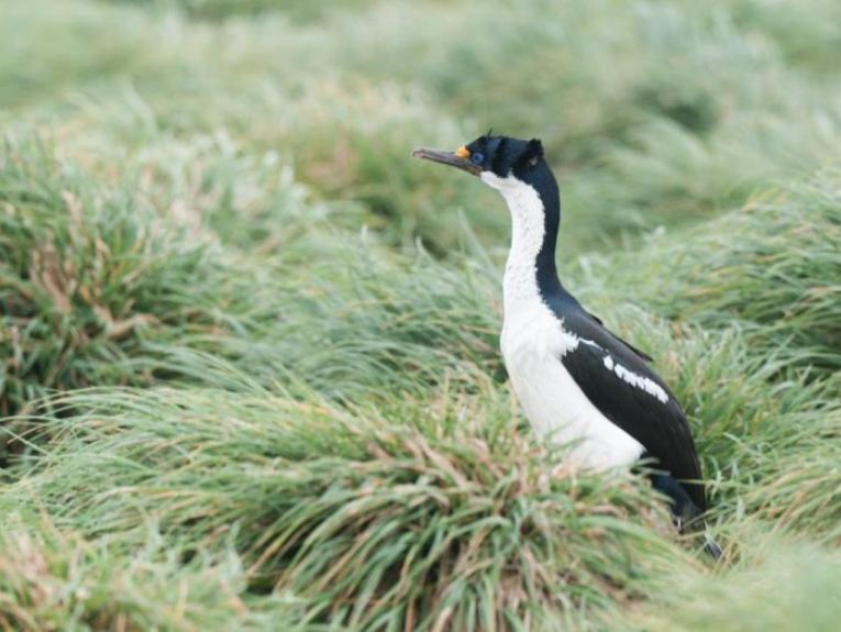 A shag in the grass