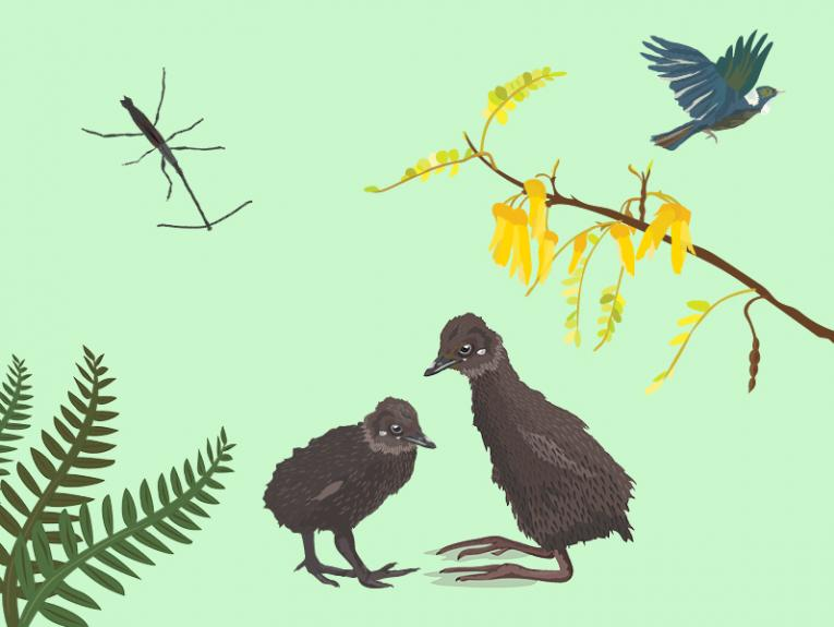 Illustration of tūi, weka, giraffe weevil, kōwhai, and fern