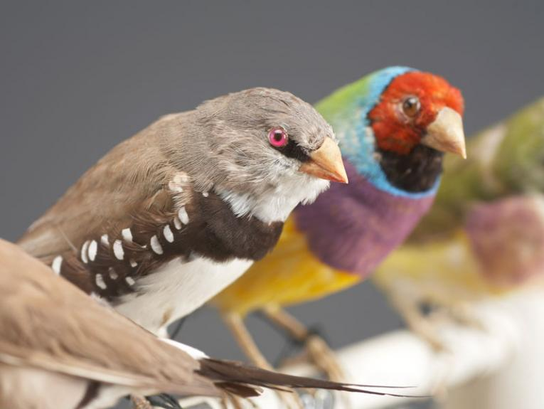 Taxidermy birds on a perch