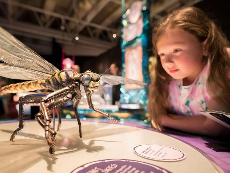Girl looks at model of dragonfly