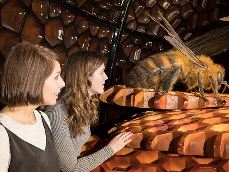 Women look at giant bee