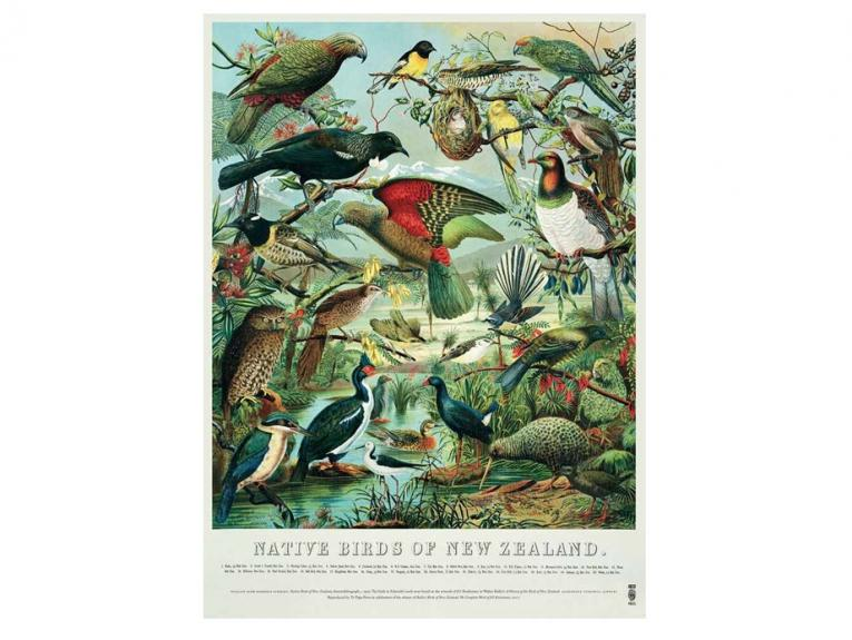 Buller's Birds of New Zealand Poster