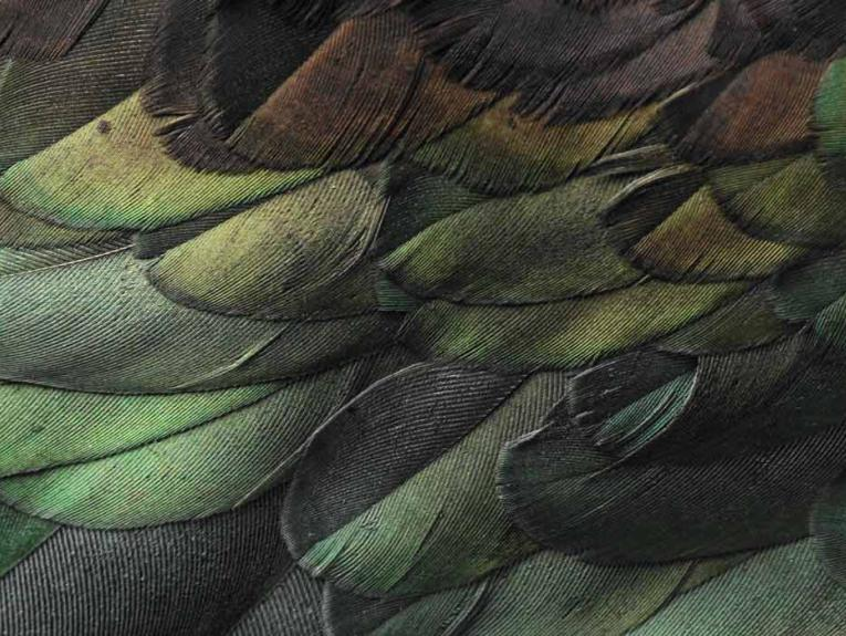 Close-up of feathers
