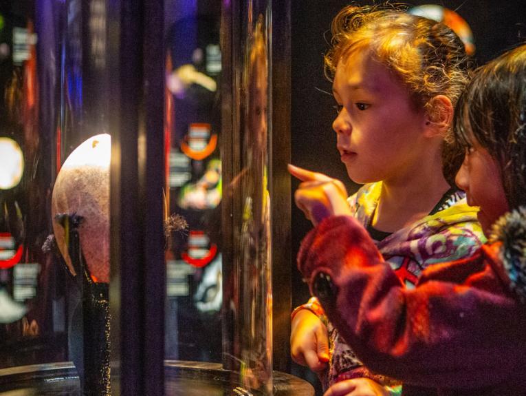 Children look at moa egg