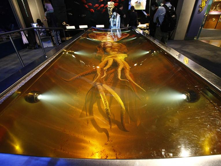Photograph of the colossal squid exhibit at Te Papa