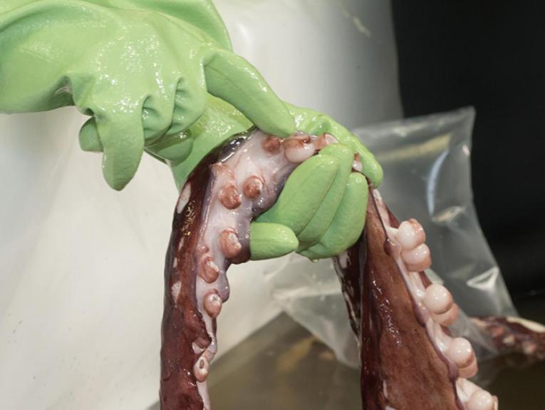 A scientists holds the tentacles of the colossal squid