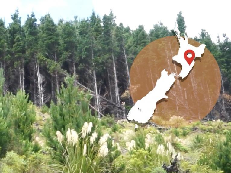 A bank of trees with a map of New Zealand overlaid on the top right corner