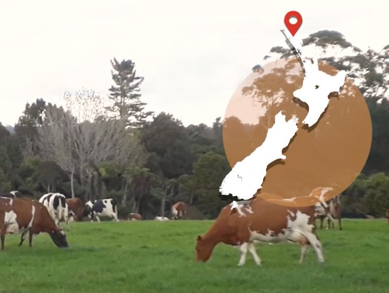 A view of cows eating grass on a farm. There's a map of New Zealand overlaid on the image on the top right-hand side.