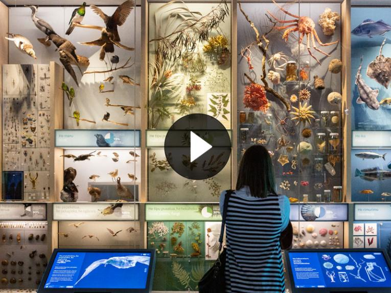 Visitor in front of a cabinet filled with hundreds of specimens