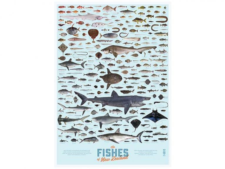 Fishes of New Zealand poster