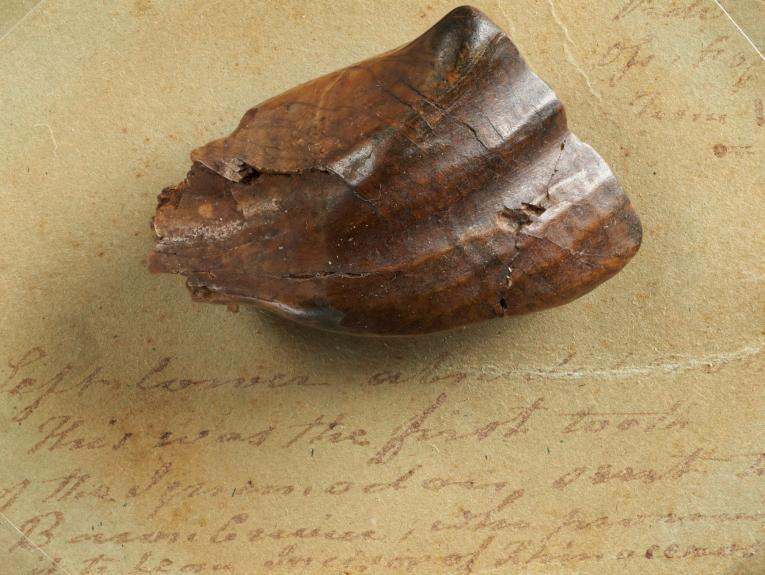 Fossil tooth on a stain piece of paper with writing on it