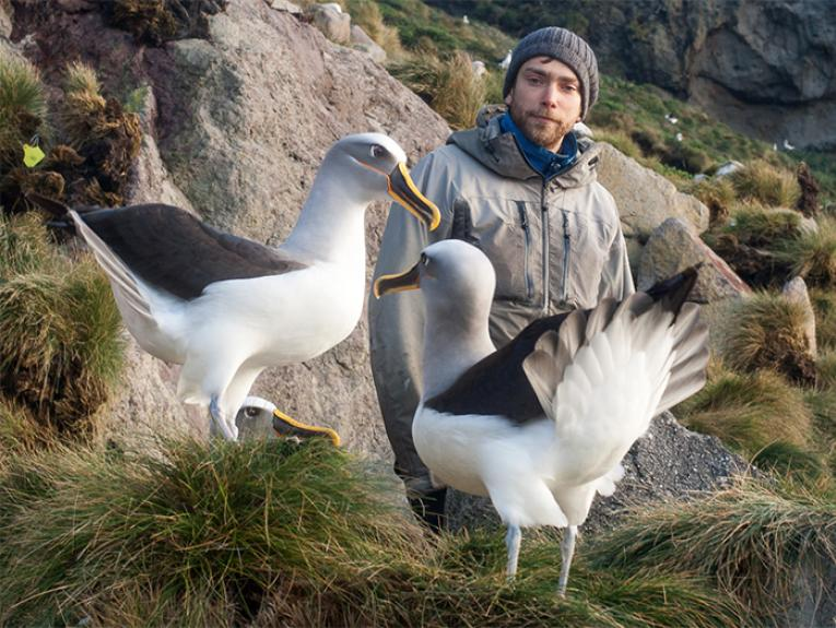 Tim Poupart watches two adult birds displaying