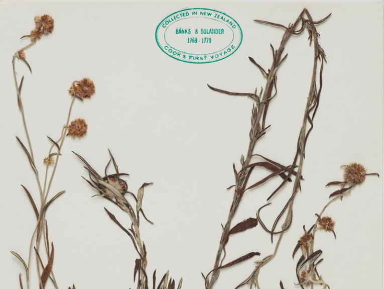 Dried plants on card