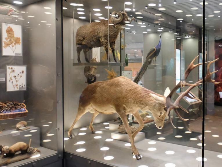 Stag, sheep, and stoat taxidermy in the Blood Earth Fire exhibition
