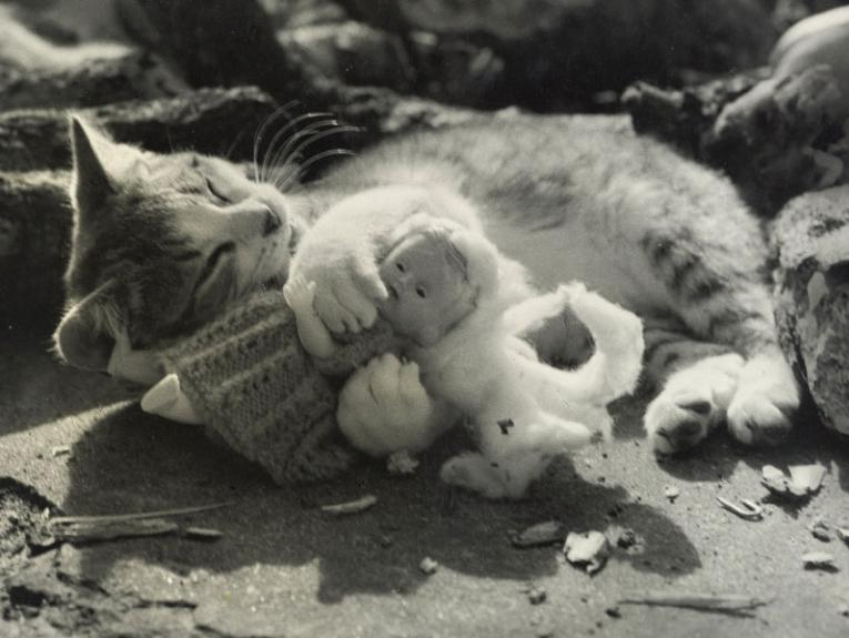 A cat cuddles with a doll