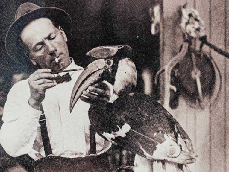 1920, E J Haynes, with a cigarette in his mouth, tends to a taxidermy horn bill