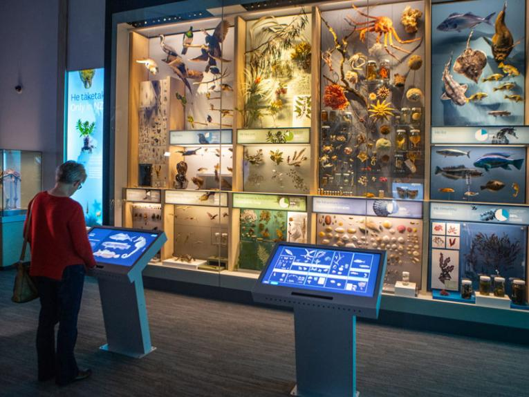 Visitor looking at natural history specimens in a case