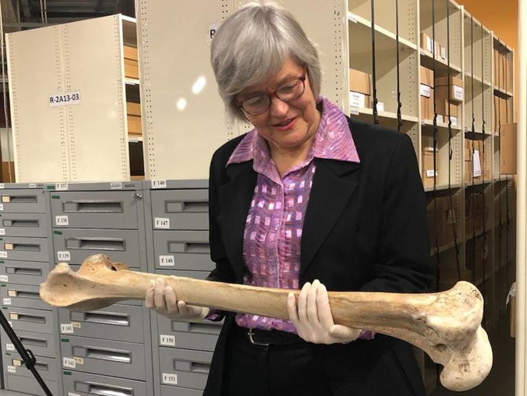 Woman holding a long bone with shelves and drawers behind her