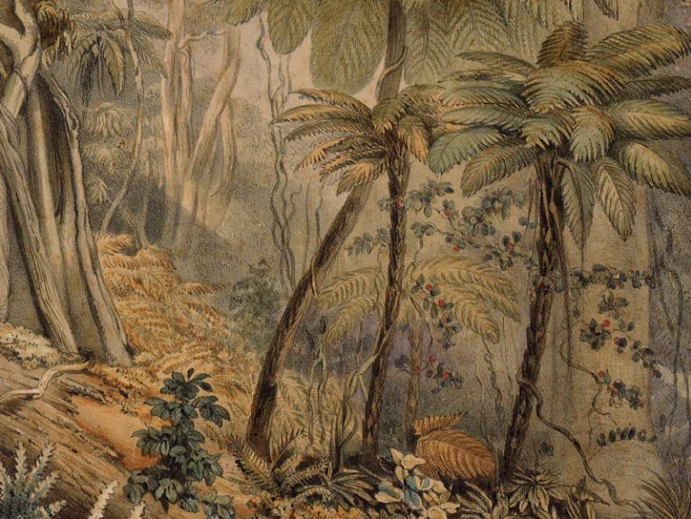 A watercolour scene of a forest, including lots of tree ferns