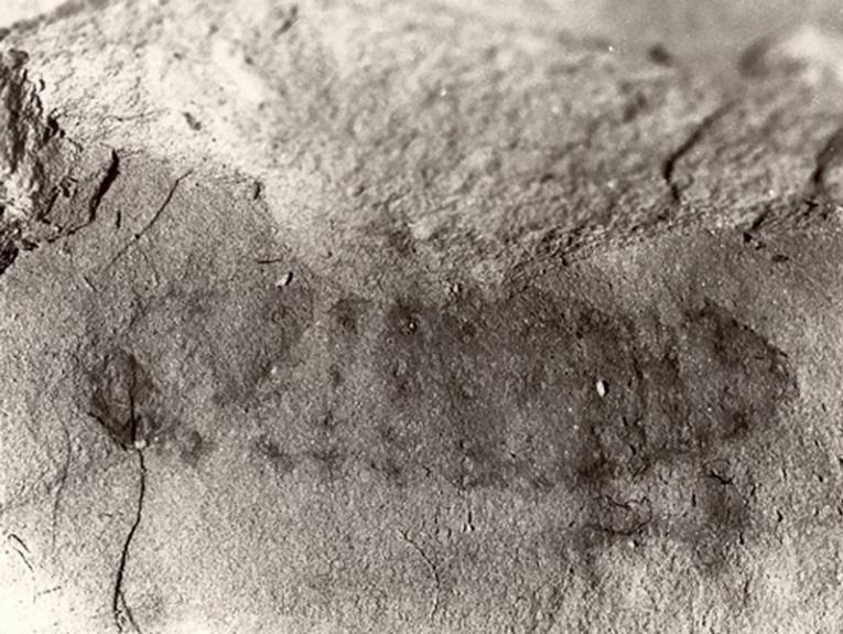 An imprint of a bug shape on a grey rock