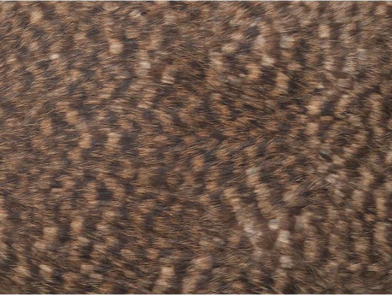 Kiwi feather detail