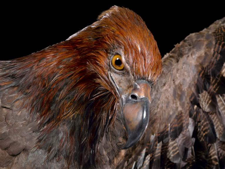 A model of the extinct Haast's eagle