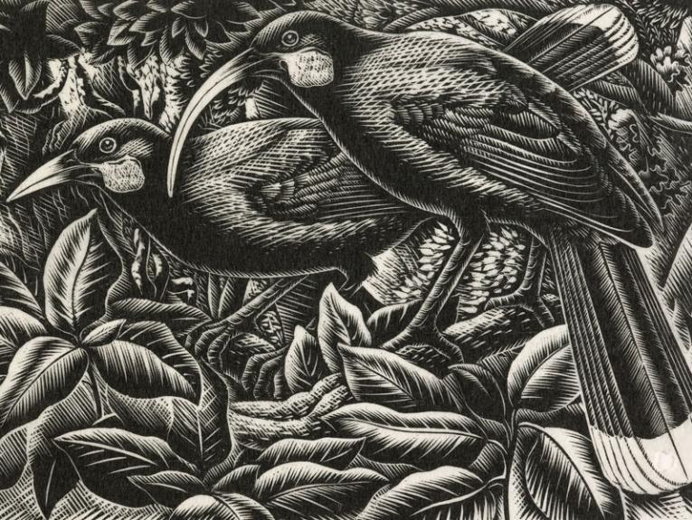 Print of two huia birds