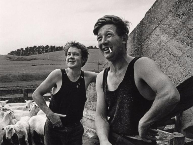 Two sheep shearers