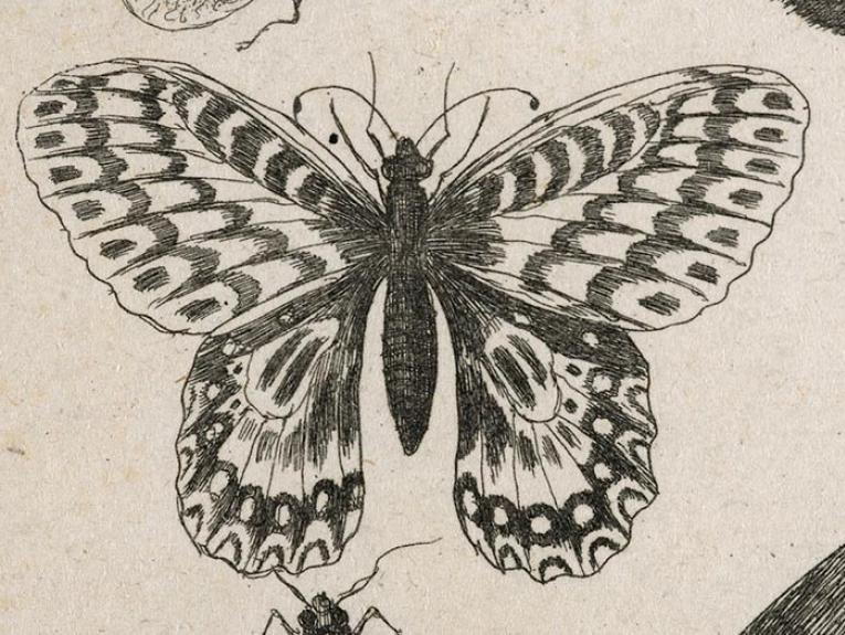 17th century insect image