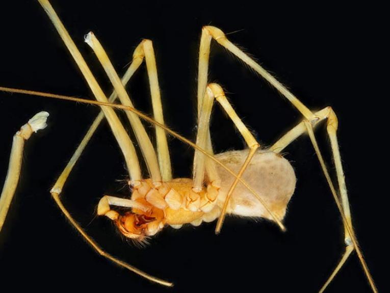 Spider specimen