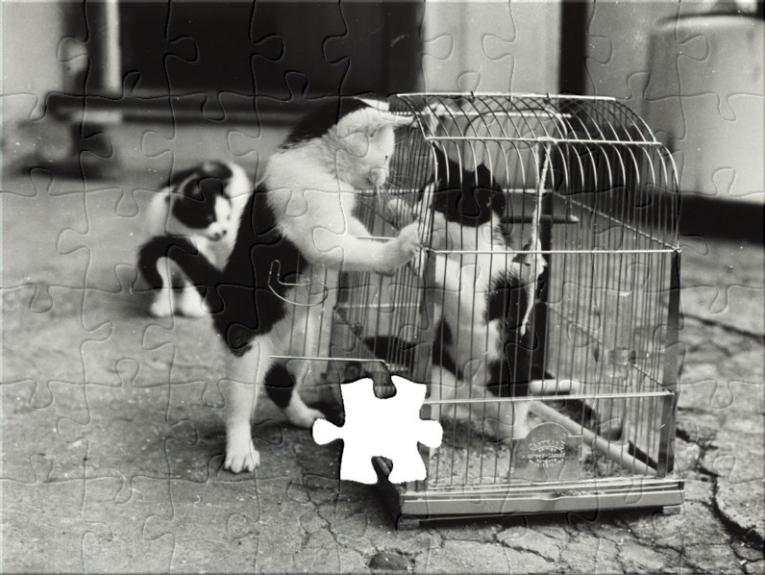Jigsaw puzzle of kittens playing in a cage