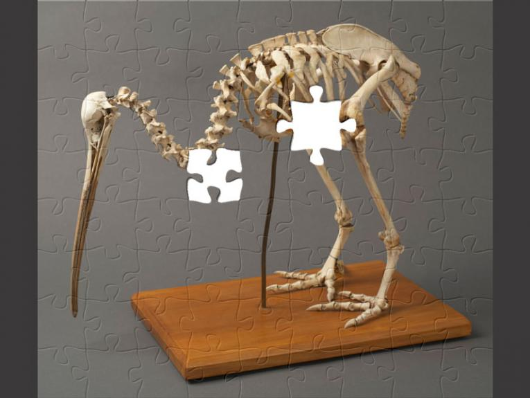 Puzzle pieces making up a kiwi skeleton
