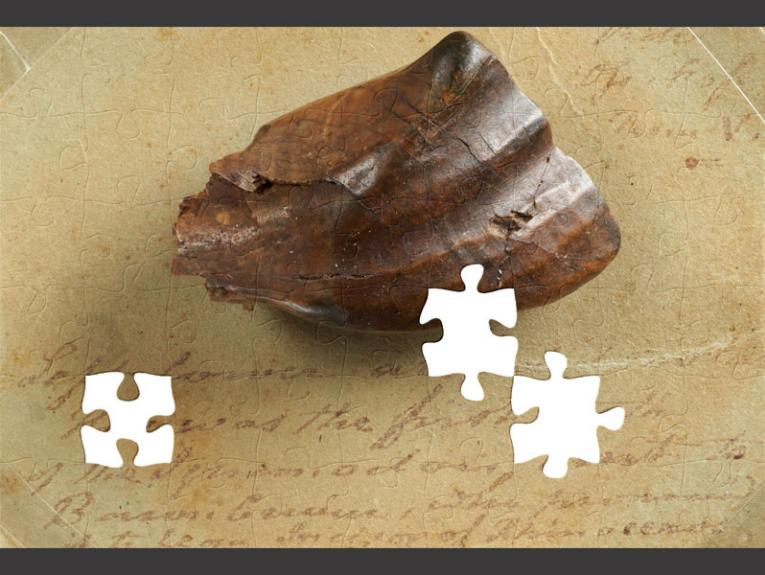 Large tooth making up a jigsaw puzzle, some pieces missing