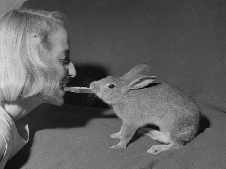 A woman with a rabbit, they are playing tug-of-war with a piece of toast