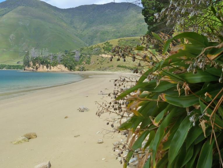A beach with a flowering plant in the foreground