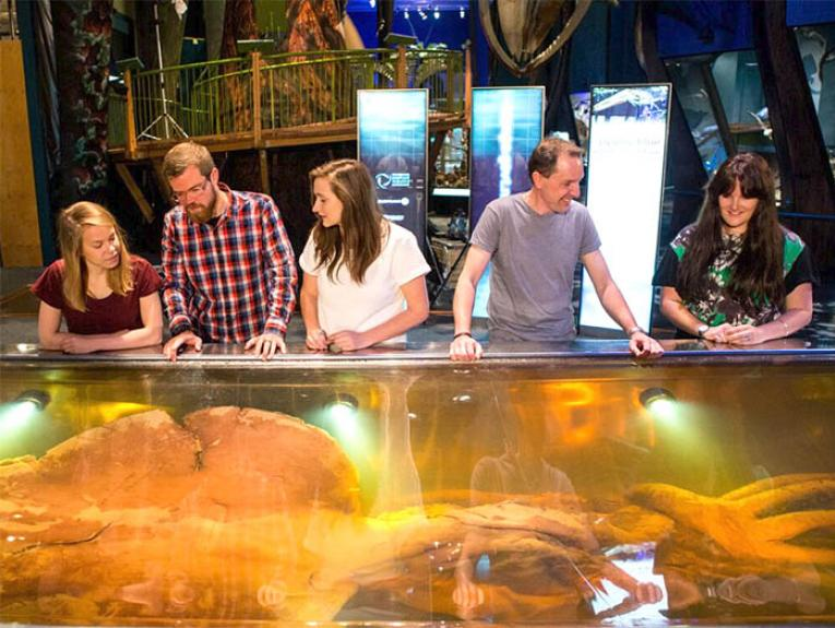 Visitors look at the colossal squid