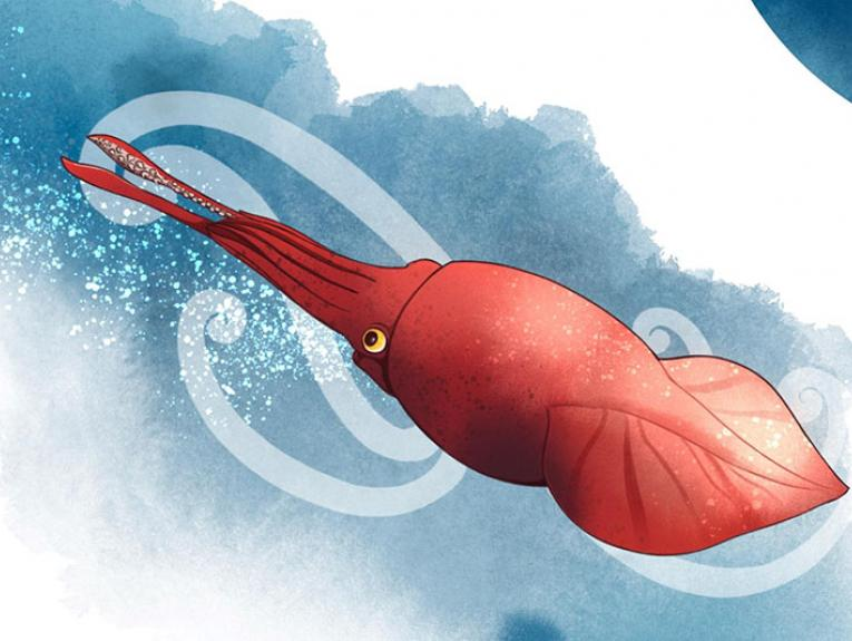 Illustration of a colossal squid