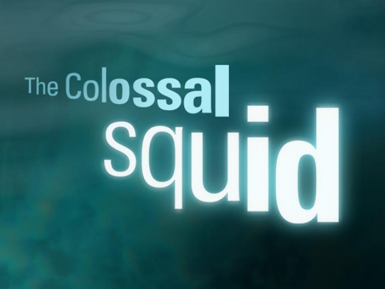 The Colossal Squid, Te Papa