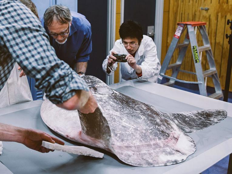 Te Papa scientists examine the new sunfish