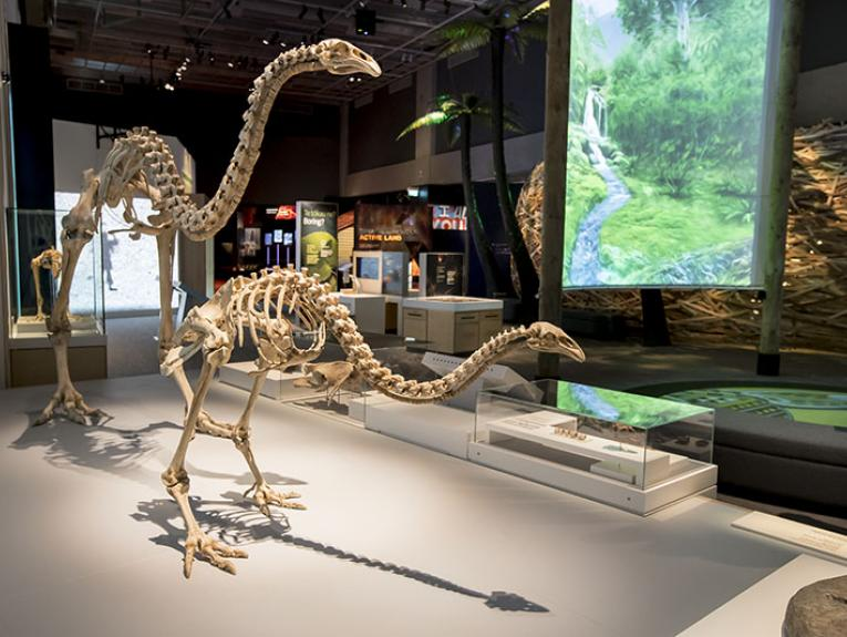 View of Te Taiao   Nature, with two moa in the foreground and various displays behind