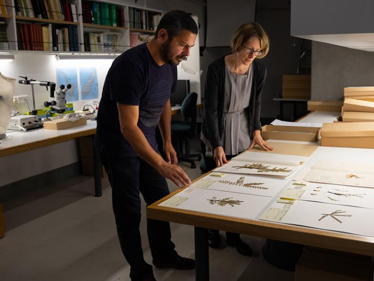 Two people looking at plant specimens in a lab