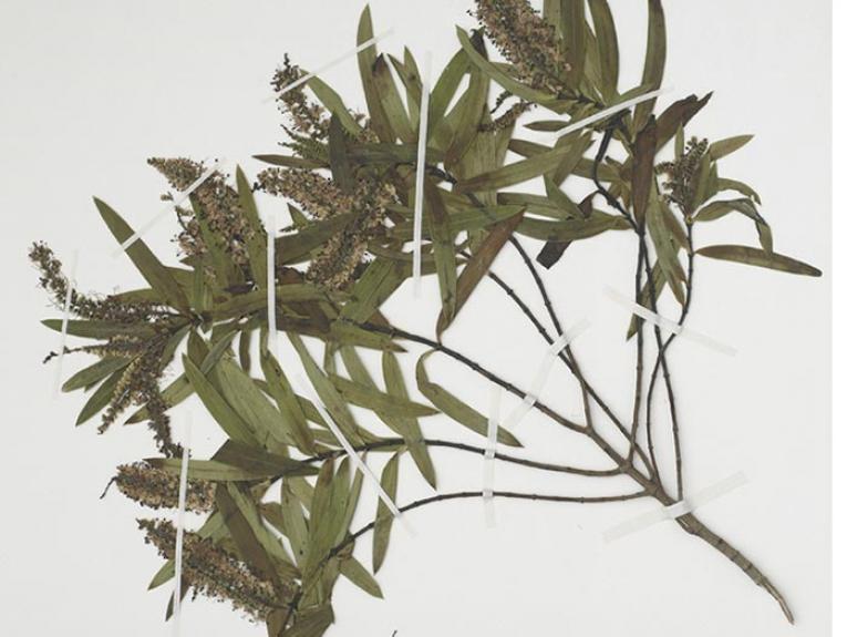 Botany specimen