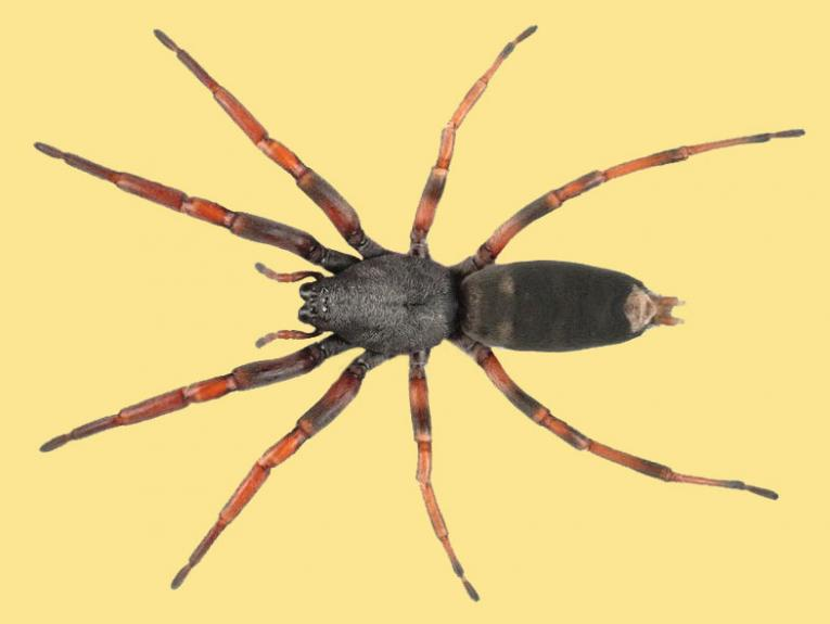 Spider on a yellow background