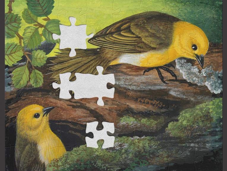 Painting depicting two yellowhead birds, with vibrant yellow heads and underside plumage and green back and wing plumage, sitting on a mossy log