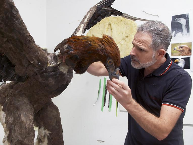 Man makes a full-size Haast's eagle model