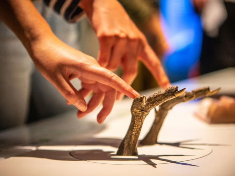 Children touching models of kiwi feet